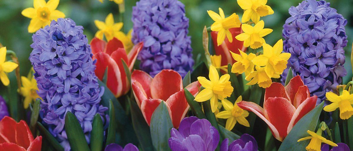 Permalink to: Spring Has Sprung!